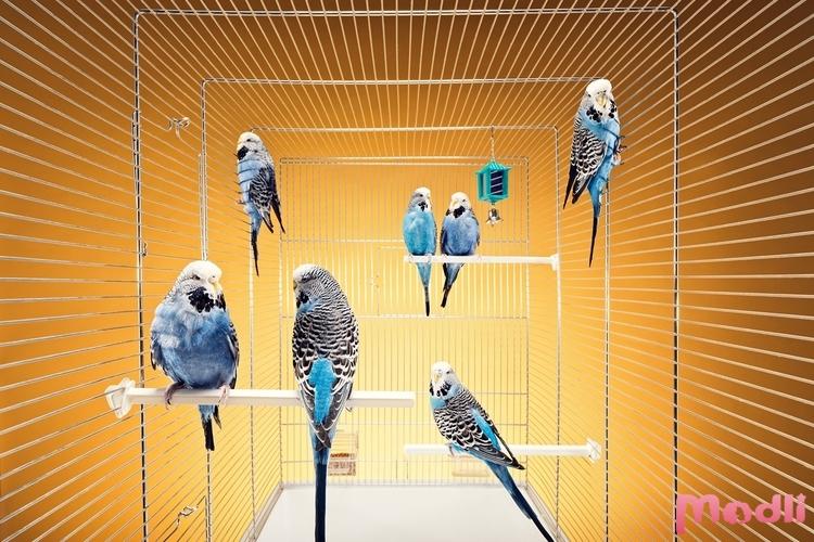 Болезни попугаев